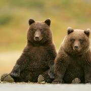 Медведь угодил под поезд в Глазовском районе