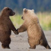 житель удмуртии поймавший двух медвежат оштрафован на 10 тысяч рублей